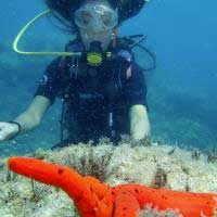 Image tuor Try Scuba Diving - Eng